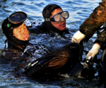 Divers operate at the site where the capsized passenger ship Sewol sank in the sea off Jindo, during the search and rescue operation in the sea off Jindo, April 22, 2014, in this picture provided by South Korean Navy and released by Yonhap on April 23, 2014.  REUTERS/South Korean Navy/Yonhap