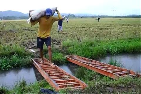 Target na rice self-sufficiency, hindi naabot noong 2013