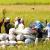 FILE PHOTO: Mga magsasaka sa La Union na nag-aaani ng palay. Sa pagtataya ng Department of Agriculture, inaasahan na ngayong taon ay makukuha na ng bansa ang 100% rice self-sufficiency. (RICHARD CORTEZ / Photoville International)