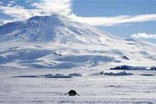 A lone foraging emperor penguin ''toboggans'' on its belly across the frozen Ross Sea, with the live volcano Mount Erebus in the background, off Ross Island, Antarctica, December 9, 2006. CREDIT: REUTERS/DEBORAH ZABARENKO