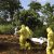 A burial team wearing protective clothing prepare the body of a person suspected to have died of the Ebola virus for interment, in Freetown September 28, 2014. CREDIT: REUTERS/CHRISTOPHER BLACK/WHO/HANDOUT VIA REUTERS