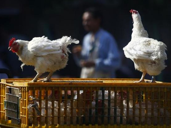 A man walks past live chickens on the outskirts of Cairo, December 4, 2014. CREDIT: REUTERS/AMR ABDALLAH DALSH