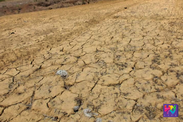Natutuyong lupa sanhi ng El Niño.