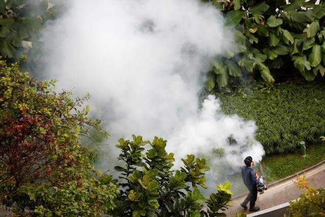 A contractor fogs a condominium garden in Singapore in an effort to kill mosquitoes, September 5, 2013. REUTERS/Tim Wimborne/File Photo