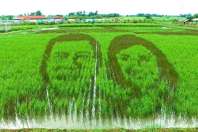The likeness of Pres. Rodrigo Duterte and VP Leni Robredo grown on a rice paddy