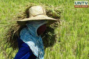 image_oct-04-2016_untv-news_local-farmer