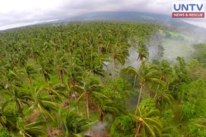 Coconut tree plantation as captured by UNTV drone.
