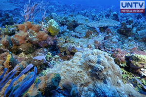 Screenshot from Benham Bank Expedition documentary of Oceana Philippines