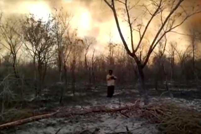 Bolivia: Blazes destroyed around around a million hectars of forest this year