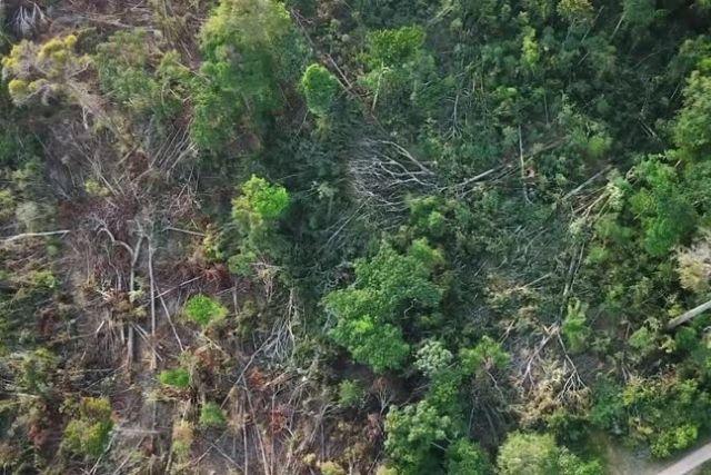 Brazil bans burning forest for 60 days
